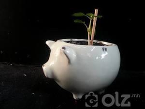 Цэцэгний сав