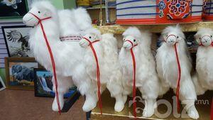 Чихмэл монгол тэмээ